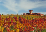Highfield Winery - great tasting - image courtesy of Destination Marlborough